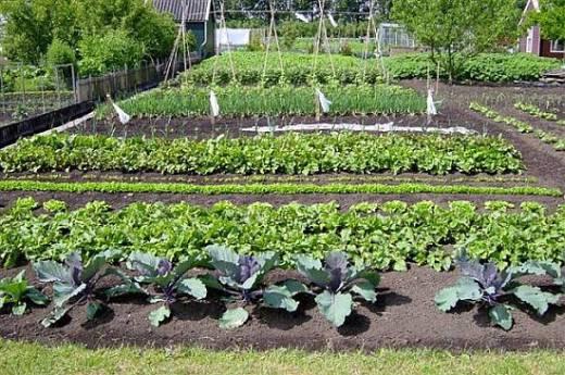 Een moestuintje aanleggen doomkerke for Groenten tuin